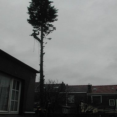 elagage-abattage-arbres-leffrinckoucke-dunkerque-teteghem-zuydcoote-bray-dunes-0